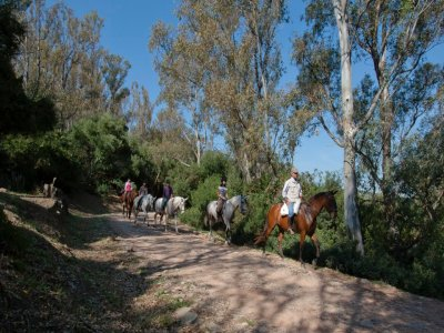 Horseback route and meal in Alcorconales 6h
