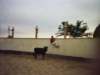 Escapando de la vaquilla