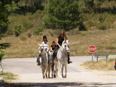 Ruta a caballo Villalba de la Sierra 1h30m