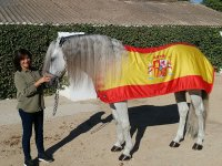 Horse with the flag of Spain