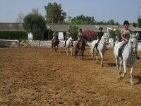 clases equestres en pista