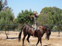 horse training courses