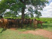 caballos de legola