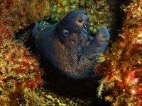 潜水在比斯开莫雷纳底部准备潜水潜水员水下