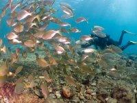 在鱼间潜水