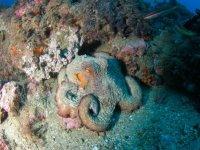 Encuéntrate con la vida subacuática