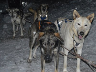 Night Dog Sledding in Grau Roig 4 km w/ Warm Wine