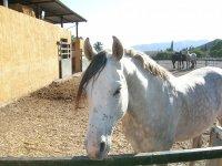 Centro de equitación de Almería