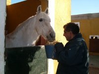 Nuestros nobles  caballos