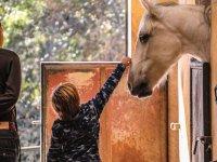 Acariciando al caballo en el box