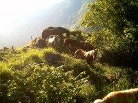 manada de caballos semi-salvajes