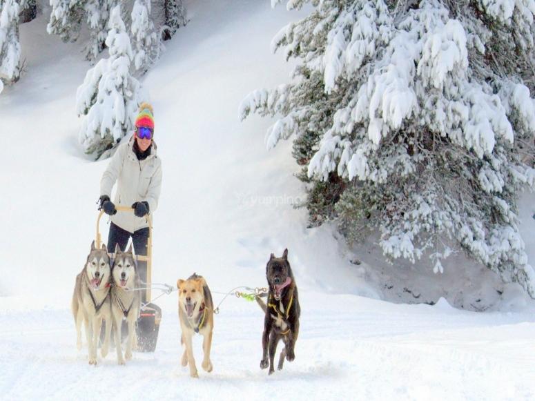 Ruta en trineo de nieve
