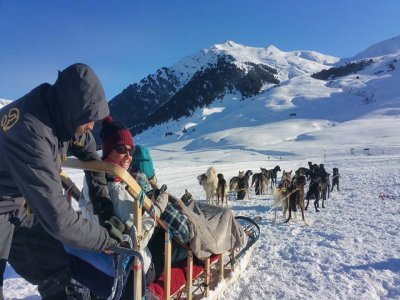 Dog Sledding Tour Along  Bears Path 1 hour