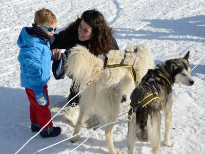 Dog Sledding for kids Bear Route 60 min