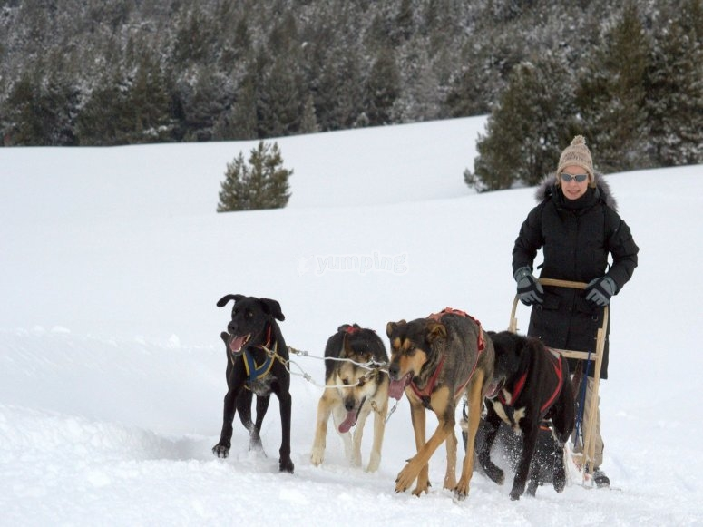 A dog sledding tour