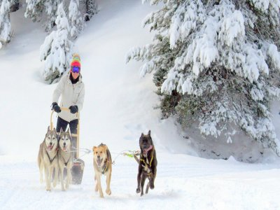 Dog Sledding tour Montgarri for children, 90 min.