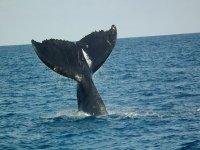 la cola de la ballena