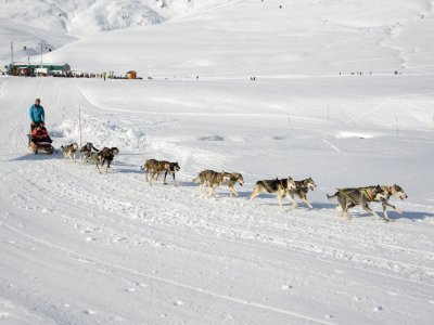Dog Sledding in Pla de Beret (Val d'Aran)