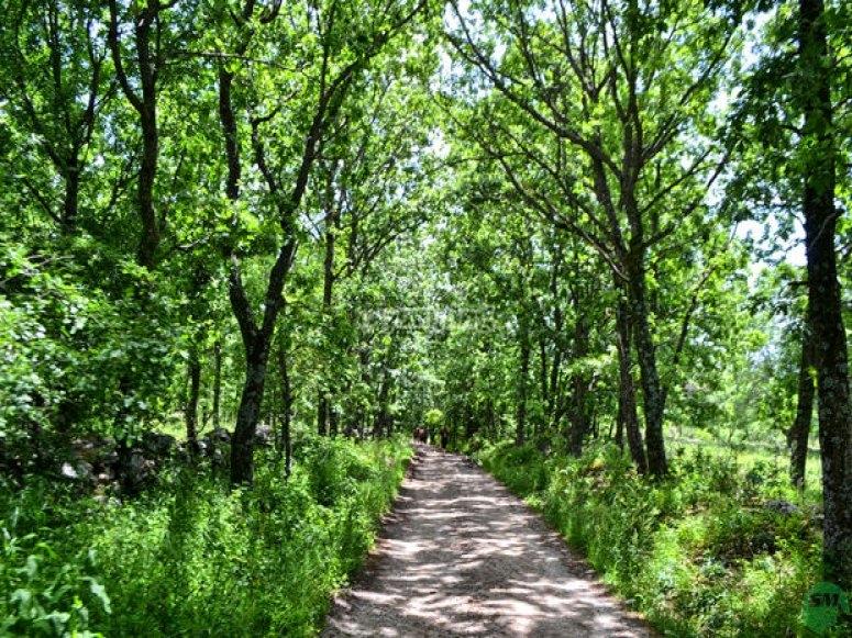 Ruta de Senderismo de la Chorrera de San Mamés. Bosque- Foto de senderismomadrid.es