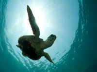 Dive with the marine fauna