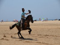 Galloping on the sand