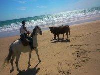 公牛海滩马背骑手