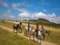 铝马步马在沙丘