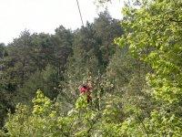 descent trees