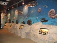 Centro de fósiles Nautilus