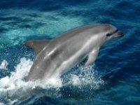 Delfines en el Estrecho de Gibraltr