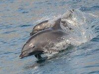 Delfines vistos desde el catamaran