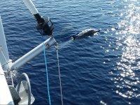Fotografiando al delfin desde el barco