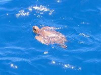 we find a sea turtle