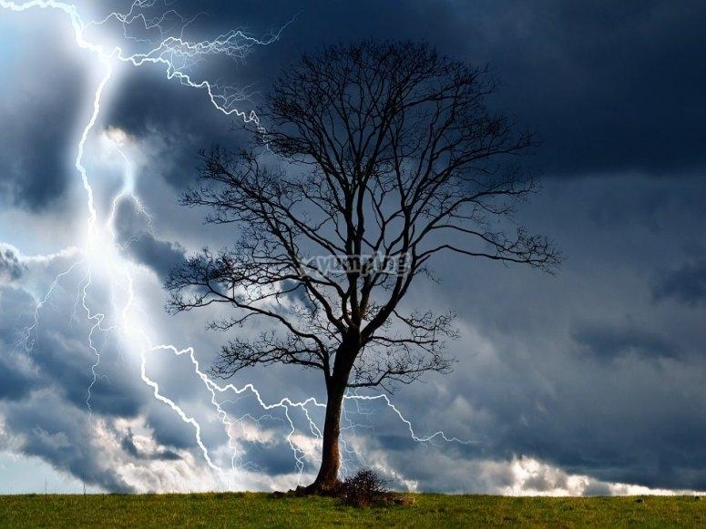 Tormenta en el árbol