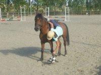 Recogiendo el balon desde el caballo