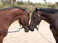 马拥抱对方