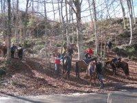 标志dOsona停在树林间的马匹