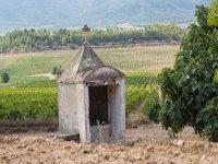 Por los campos y viñedos de Enguera