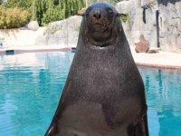 Meet our sea lion