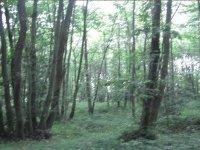 Escenarios entre bosques