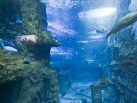 Impresionantes acuarios