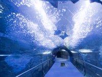 Tunel bajo el acuario