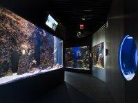 Varios acuarios