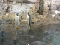 Oceanografic Penguins