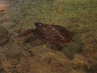 conoce nuestra tortuga