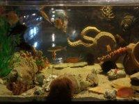el acuario mas espectacular