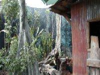 La jungla