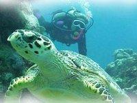 Conoce a las tortugas