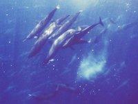 Avista mamíferos marinos