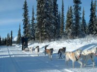 Dog sled, mushing